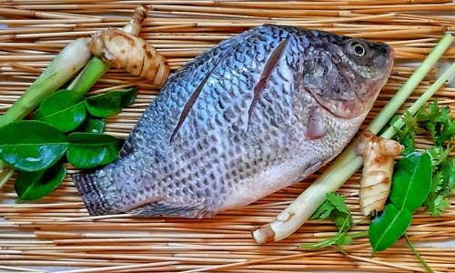 Tasty Fish Recipes Online 2 - Resources