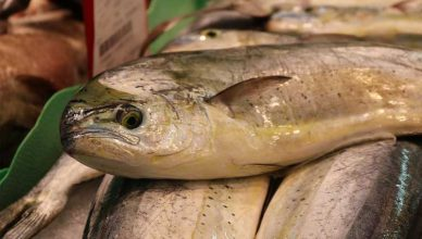 The Fresh Fish Most Often Used in Recipes 388x220 - The Fresh Fish Most Often Used in Recipes