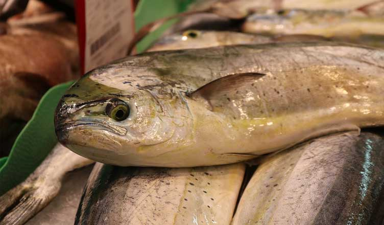 The Fresh Fish Most Often Used in Recipes - The Fresh Fish Most Often Used in Recipes